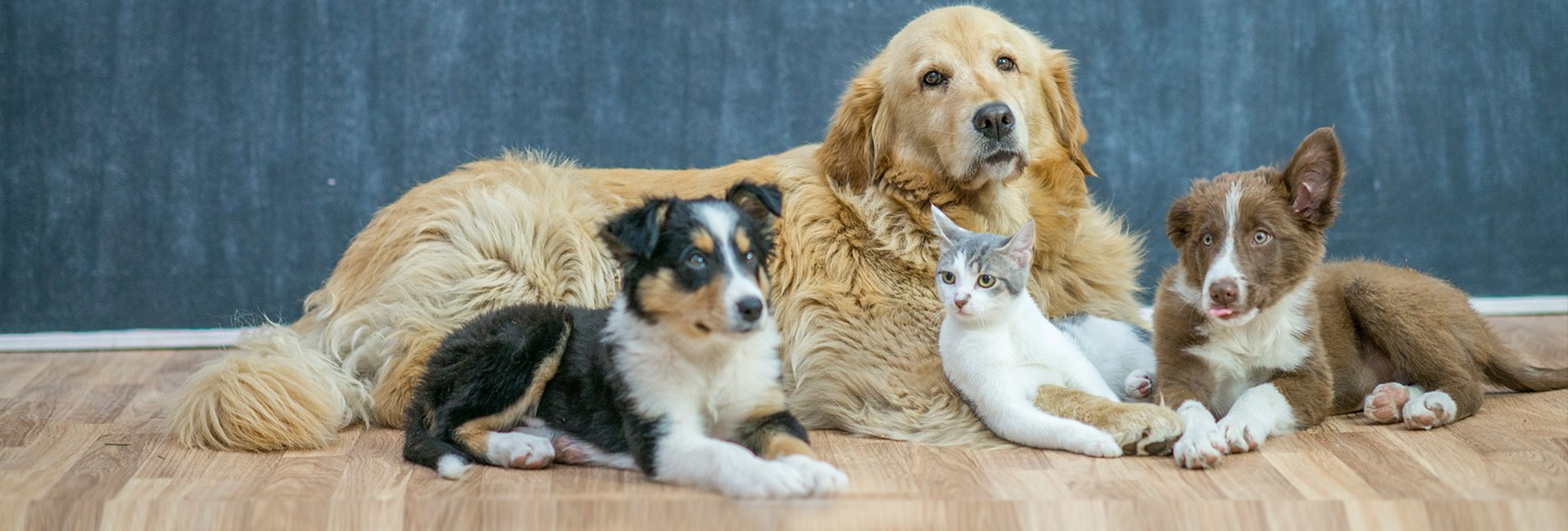 veterinaire-crahay